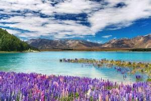 lago-tekapo-nuova-zelanda